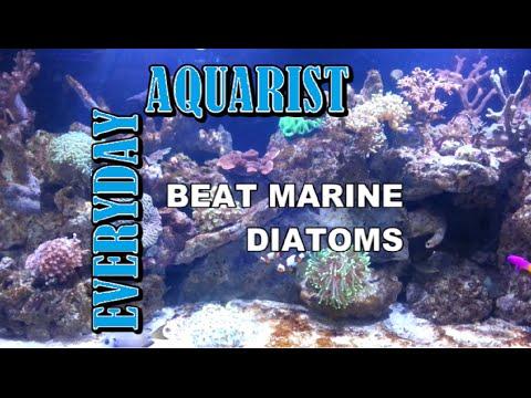 How To Kill Marine Aquarium Brown Algae & Diatoms