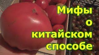 Мифы о китайском способе выращивания томатов