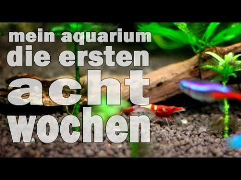 Mein Aquarium - Die ersten acht Wochen (Doku und Tutorial) Piscina #1