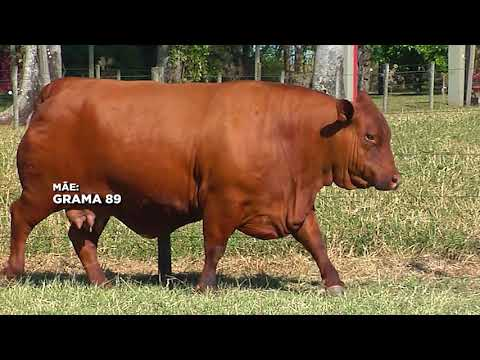 LOTE 35   ZT 3980