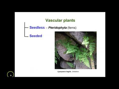 Essential Botany- Video 1-Introduction and General Plant Taxonomy