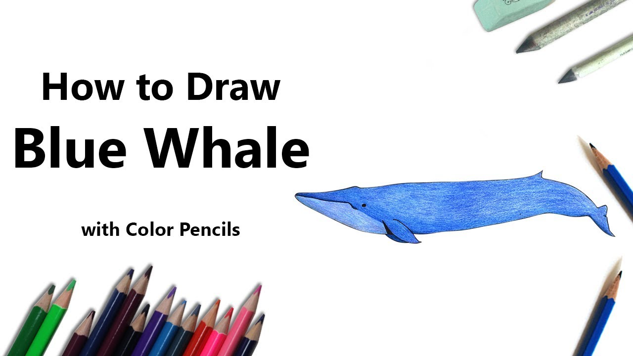 How To Draw A Blue Whale With Color Pencils Time Lapse