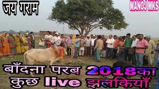 बाँदना परब का कुछ live video / बरद खूँटा / अहिरा गीत