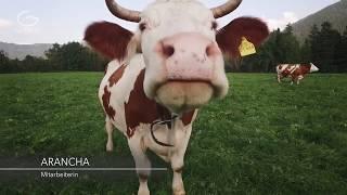 Производство молочной продукции с использованием технологии Grander на ферме.