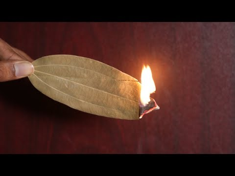 Burn A Bay Leaf In Your Room And Watch What Happens!