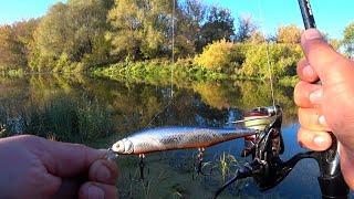 РЫБАЛКА НА ВОБЛЕРЫ 2021 Рыбалка на СПИННИНГ с берега Твичинг воблеров