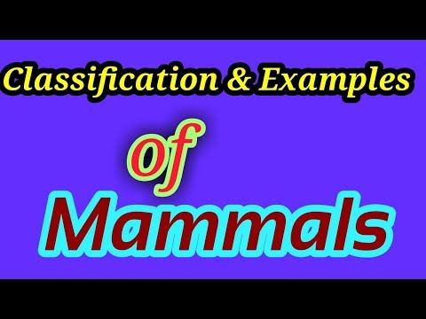 classification of mammalia with Examples
