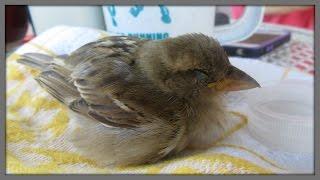 Bird Funeral