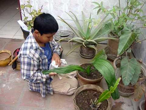 Cuidando las plantas andrea corazones limpios para un - Plantas para estanques de jardin ...