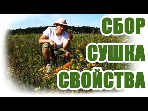 Дикорастущие растения: съедобные и лекарственные травы из