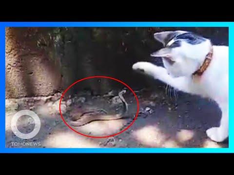 Kucing vs Kobra; Laser untuk singkirkan sampah antariksa - TomoNews