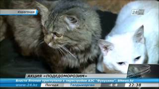 Караганда - акция в защиту бездомных животных