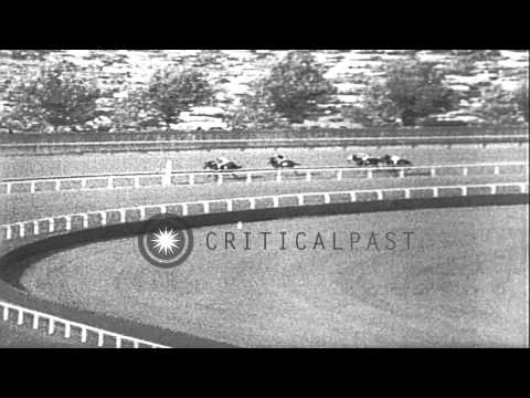 Spectators watch as Damascus wins the Woodward Stakes in New York. HD Stock Footage