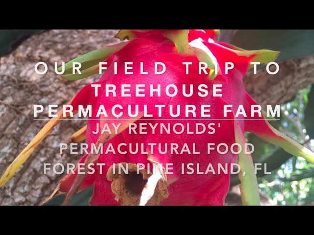 Jay Reynolds' Treehouse Permaculture Farm - Permaculture Food Forest