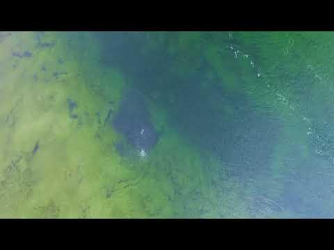 Kings Park Drone Fish Ball Long Island New York