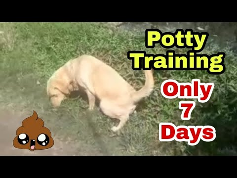 How to potty train your Dog or puppy in 7 days in hindi.