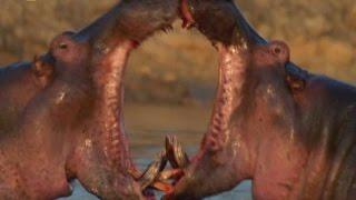 Самые Опасные Животные Амазония !!! Животные с National Geographic / Видео