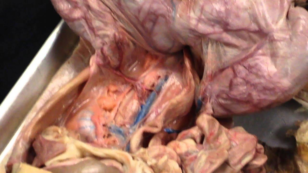 3d abdominal anatomy