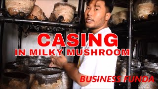 HOW TO PREPARE CASING SOIL AND CASING IN MILKY MUSHROOM