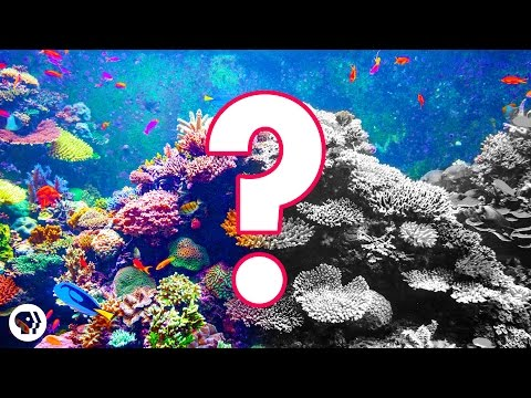 Can Coral Reefs Survive Climate Change?