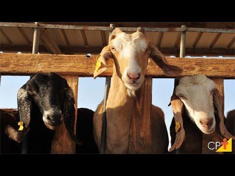 Clique e veja o vídeo Curso Criação de Cabras Leiteiras - Instalações, Raças e Reprodução CPT