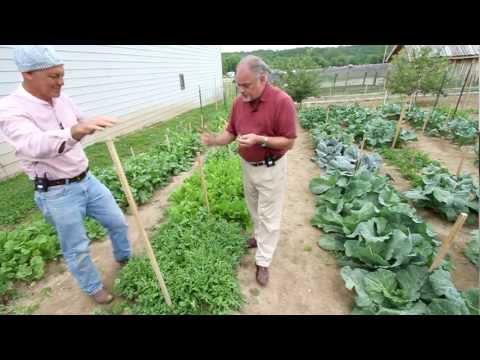 Salad Greens Part 2   Weaver