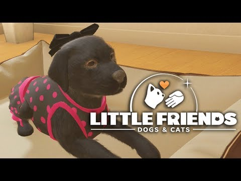 Little Friends: Dogs & Cats - Every Dog Has Its Day