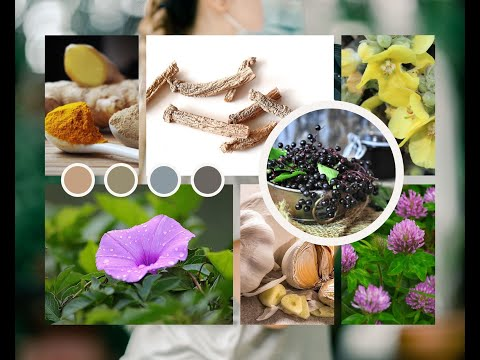 Best 10 Herbs for immune system