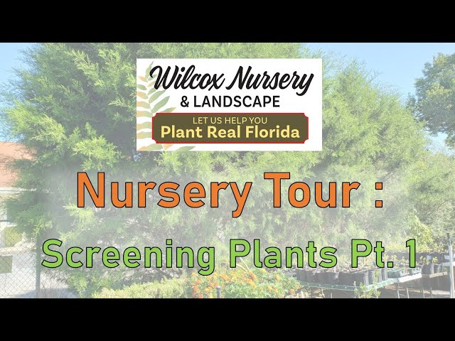 Nursery Tour- Screening Plants, Pt. 1