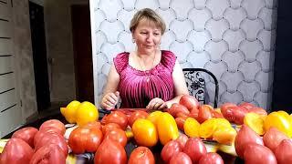 Сорта томатов в разрезе 2020 года. 1часть.