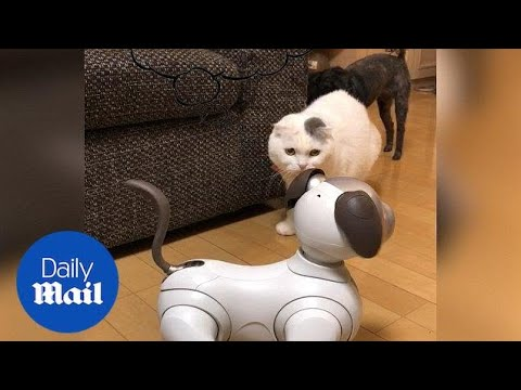 Hilarious moment cat and dog are confused by robot dog - Daily Mail