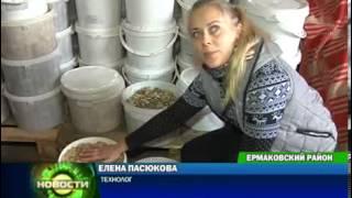 Заготовка груздей в промышленных масштабах