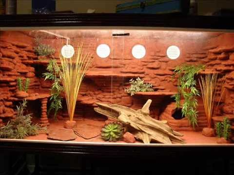 Custom bearded dragon viv youtube - Decor de fond terrarium desertique ...