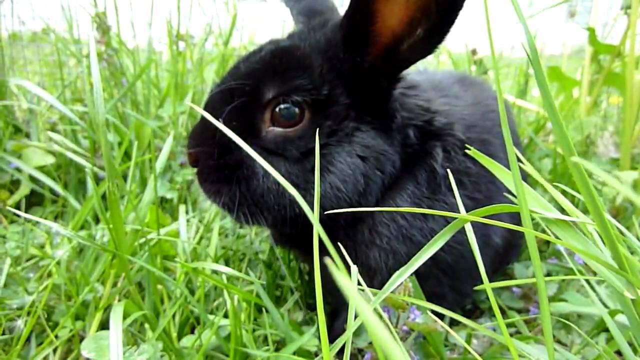Gut gemocht lapin noir - YouTube PE19