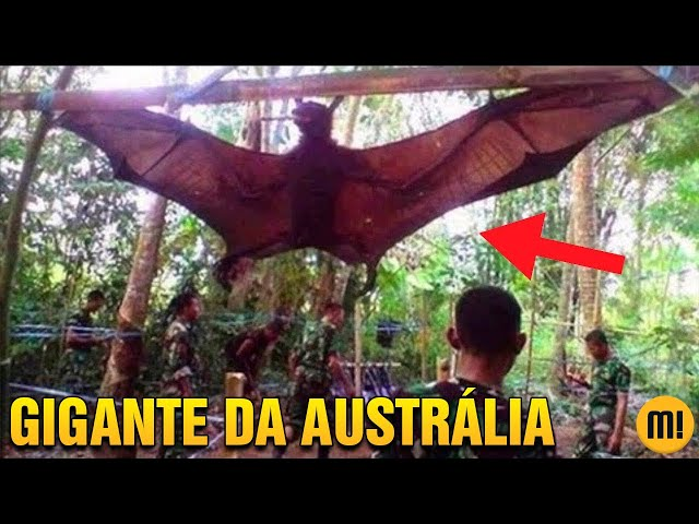 VOCÊ JÁ OUVIU FALAR NO MORCEGO GIGANTE AUSTRALIANO?