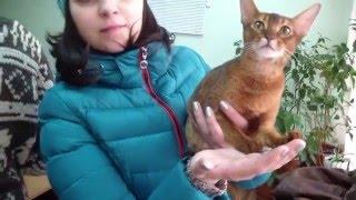 Клип №0560 - выставка кошек PCA online