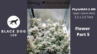 2.5 x 2.5 | Super Lemon Haze | PhytoMAX-2 400 Flower 5