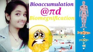 Bioaccumulation || Biomegnification ||[Hindi]|ddt problems|biological magnification class 10