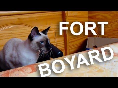 FORT BOYARD - PAROLE DE CHAT