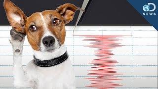 Can Animals Predict an Earthquake?