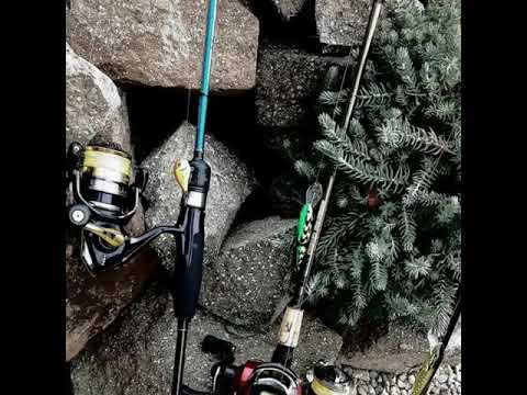 Pike, Catfish, Zander, ASP Fishing