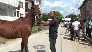 bal Sinan Razgrad DVD 1 HD