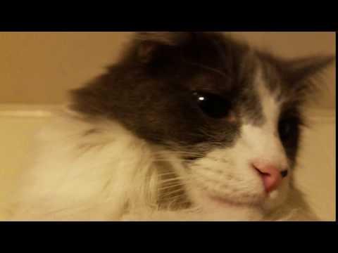 Packet Fuzzy Cat 4k