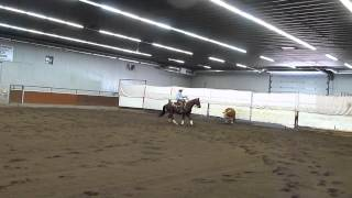 Alberta Horse Cow