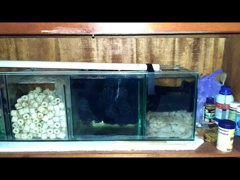 Filter Aquarium Untuk Discus