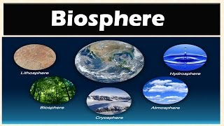 1.6 Biosphere (Levels of Organization of Ecology): Environment and Ecology [Learn Online]