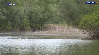 Проекты обводнения Волго-Ахтубинской поймы получат федеральную поддержку