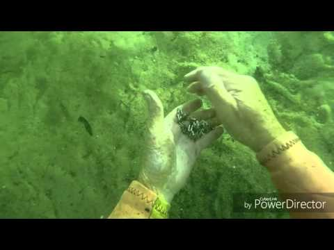 Metal detecting under water with Philbo.