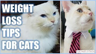 WEIGHT LOSS TIPS (for Cats!) - Pet Obesity / Cat Lady Fitness