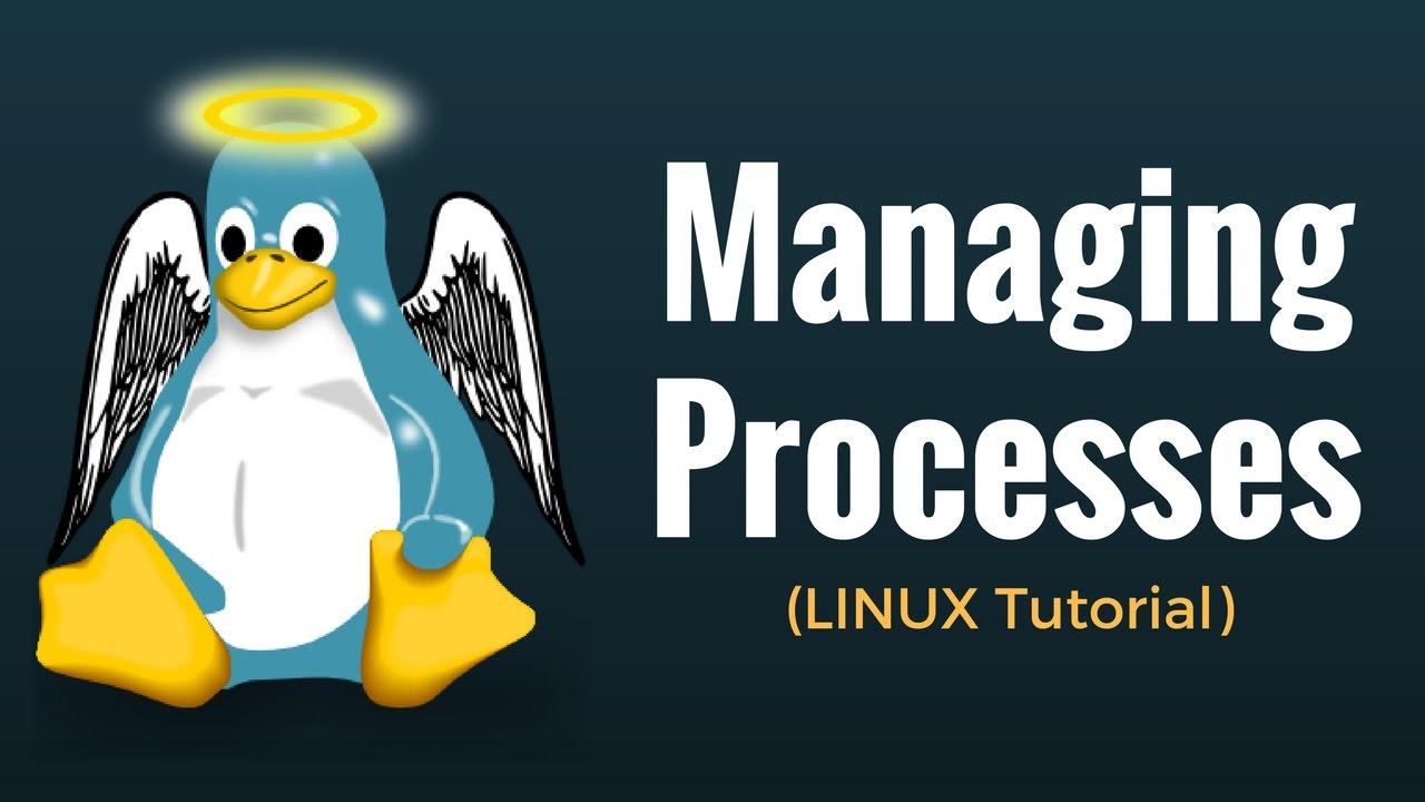 Linux/Unix Process Management: ps, kill, top, df, free, nice
